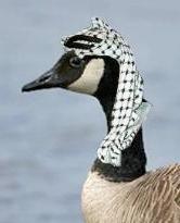 Terrorist-trained goose